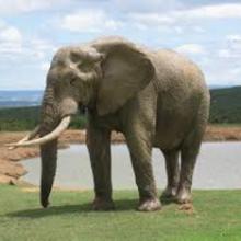 Elephant-Oneness