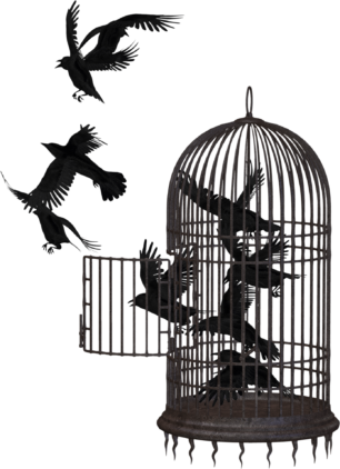 Crows free