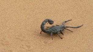 giant-scorpion2